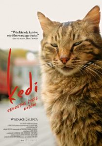 kedi sekretne życie kotów cały film online